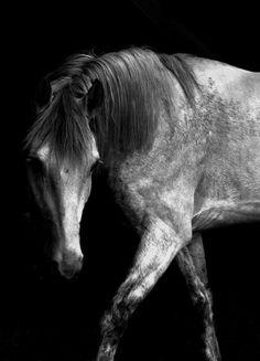 i want a gray horse....someday...