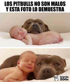 To samo się tyczy pitbulli – Dogs And Kids, I Love Dogs, Cute Dogs, Cute Baby Animals, Animals And Pets, Funny Animals, Animal Quotes, Animal Memes, Mundo Animal