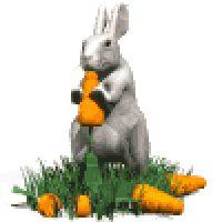 Bunny Eats Carrots Easter Emoticon Emoticons Animated Animation Animations Gif photo BunnyGreyEatsCarrotWhite.gif