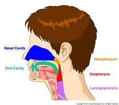 Picture of head and throat resonances