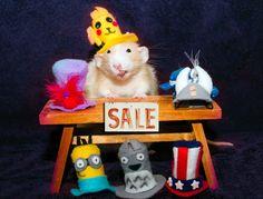 les aventures de marty mouse souris qui est en fait un rat 20