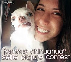Win YOUR Chihuahua a new wardrobe and more! Enter the Famous Chihuahua® Selfie Picture Contest! Details at http://www.famouschihuahua.com/contests/chihuahua-selfie-contest/ #chihuahua #chihuahuacontest #selfiecontest #famouschihuahua