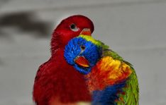 5 Truths About Interracial Dating. From Someone Whose Lived It Pretty Birds, Beautiful Birds, Bird Types, Begin Again, Custom Laptop, Parakeet, Love Heart, Parrot, Pet Dogs