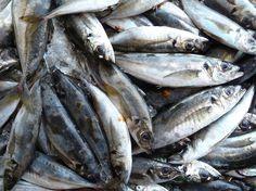 Portugal no alargará la campaña de sardina pese a la presión de los pescadores
