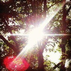 It's always the sun. Dandelion, Sun, Mood, Flowers, Plants, Dandelions, Plant, Taraxacum Officinale, Royal Icing Flowers