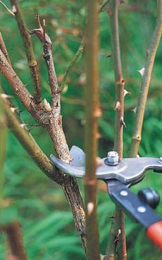 Bird Feeders, Bonsai, Gardening, Outdoor Decor, Plants, Lawn And Garden, Yard Landscaping, Teacup Bird Feeders, String Garden
