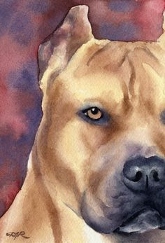 PIT BULL TERRIER Dog Signed Art Print by Artist DJ by k9artgallery   WATERCOLOR