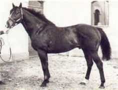 Steve's Friend(1974)Stevward- Constant Companion By Blue Prince. 4x4 To Hyperion, 5x5x5 To Selene. 4 Wins $195,163. Won Florida's Breeders Futurity, Hollywood Derby. Died In 2002.