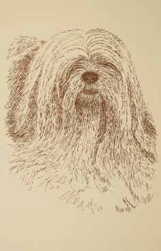 Lhasa Apso - Artist Kline draws his dog art using only words. Signed 11x17…