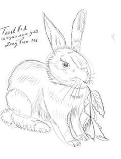 Как нарисовать кролика карандашом поэтапно 4