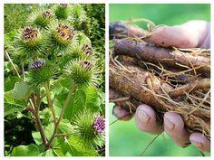 Cool Plants, Natural Remedies, Diy And Crafts, Fruit, Vegetables, Health, Medicine, Per Diem, Plants