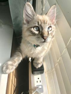 Finn as a kitten. Cute cat