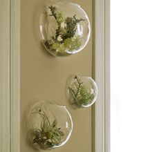 Wall Bubble Vases