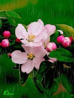 Цветочки - анимация на телефон №1337639