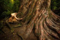 Totara – Podocarpus totara - Treegirl: Intimacy with Nature