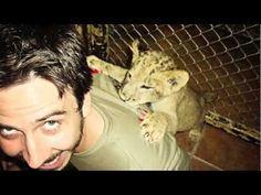 Do Volunteer work with lions in Africa