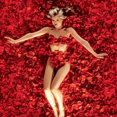 American Beauty Pictures - Rotten Tomatoes