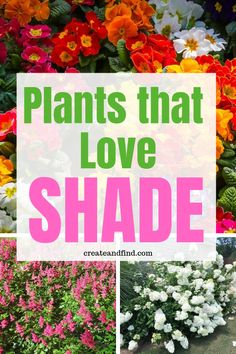Gorgeous plants that love the shade! Add some of these beautiful varieties of annuals and perennials to your yard this year to bring color to the shady areas! shade garden The 10 Best Plants that Grow in Shade Plants That Love Shade, Shade Garden Plants, Cool Plants, Shade Loving Flowers, Best Shrubs For Shade, Ground Cover Plants Shade, Shade Loving Shrubs, Shade Shrubs, Shaded Garden