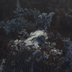 Skull with flowers will always look beautiful Witch Aesthetic, Blue Aesthetic, Ravenclaw, Fotografia Tutorial, Yennefer Of Vengerberg, Southern Gothic, Dark Photography, Dragon Age, Dark Art