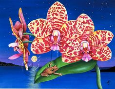Carolyn Steele tropical art print, orchids and cute tree frog, exotic starry moonlit night: A Little Night Music