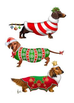 Christmas in a Dachsie household  Doxies loved to be dressed up - they are huge hams