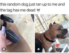 meme love Dog Memes Of The Day 32 Pics – - Lovely Ani. Dog Memes Of The Day 32 Pics – - Lovely Animals World Funny Animal Memes, Cute Funny Animals, Funny Cute, Funny Dogs, Top Funny, Memes Humor, Dog Memes, Humor Videos, Funny Videos