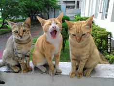 Three siblings at my hostel, all grown up. Names are Inkey, Pinky and Blinky (from left to right)