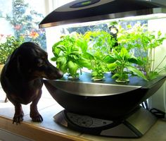 Apartment Gardening http://www.ppmapartments.com/blog/apartment-gardening-2/ #ppmapartments #chicagoapartments #welovepets