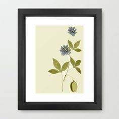 Passiflora Framed Art Print by anipani - $35.00