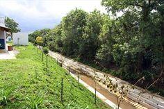 Margem do córrego Aviário recuperada com a retirada do lixo e plantio de grama e árvores de espécies nativas. Curitiba, 10/11/2008 Foto: Cesar Brustolin/SMCS