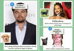 Você precisa conhecer esse site! Na verdade ele foi criado para você poder identificar a raça de um cachorrinho, carregando uma foto dele - e assim o programa se encarregaria de identificar a espécie. Mas como a internet é muito maravilhosa, por que não colocar fotografias de pessoas? Hospedado pela Microsoft, o What-dog.net gerou resultado e é muito divertido! Afinal, olha só que demais as raças das celebs: Vamos começar com a Beyoncé, uma diva da vida: Cocker para a Bey! Agora outra diva…