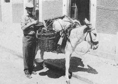 O Burro do Tio Isidoro, vendedor de produtos hortícolas no Bairro de Troino