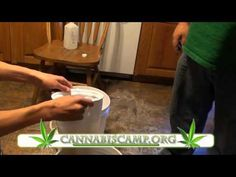 Uncle Pete and Kenny Gibson making cannabis oil. - YouTube