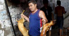 Detener la masacre del Festival de Carne de Perro en China FIRMA Y COMPARTE ESTA PETICIÓN AHORA!