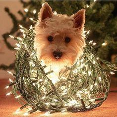 """circulopostal: """"Comienza la semana navideña! #Wetrust"""""""