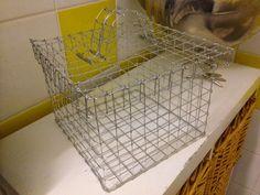 Korn, Grid, Canning, Home Canning, Conservation