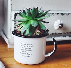 """Plant in a cup. """"A man travels the world over in search of what he needs, and…"""