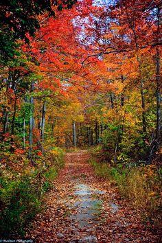 Wolf Trail (Gatineau Park, Quebec) by Al Mailman on 500px cr.🍂🇨🇦