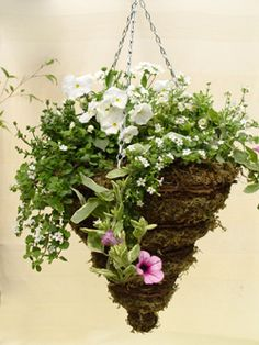 flowers for cone shaped hanging baskets | Hanging Baskets Direct