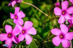 Stefanodav's Shot-Blog: The colors of spring...