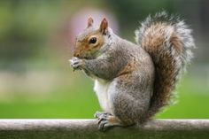 If You Tweet About Squirrels or Follow Him, Craigslist Founder Will Donate $1