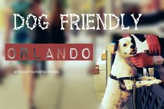 Dog-friendly spots in Central Florida | On the Town (hotels and restaurants prt friendly) - WESH Home