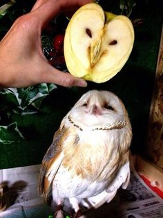 I just love the expression on that little owl' s face. He seems so delighted to meet the fruit owl