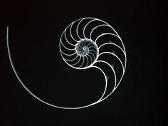 Fractal yin yang. Fibonacci