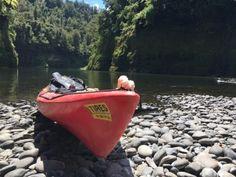 Eva Blog Whanguani River canoes