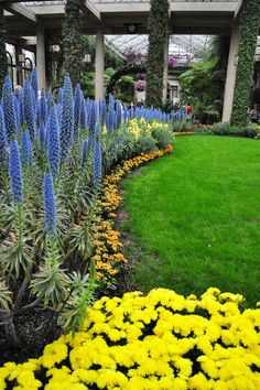 Here the river of blue 'Pride of Madeira' is actually given a landscaped shoreline. The border of diminutive yellow blooms defines the river's curved line.