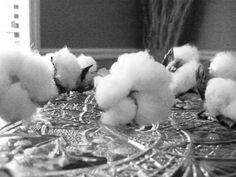 Alabama Chanin Organic Cotton