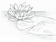 Lily Pad Flower Drawing BH-ideas~hi