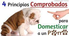 Descubra los cuatro principios para domesticar/entrenar a un perro de cualquier edad y la importancia de ser más paciente, utilizar el refuerzo positivo y consistente. http://mascotas.mercola.com/sitios/mascotas/archivo/2014/04/17/4-principios-comprobados-para-domesticar-a-su-perro.aspx