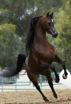 I love these unrestricted horse pictures. Their moves are beautiful and you can see the class in them. Beautiful Arabian Horses, Most Beautiful Horses, Majestic Horse, All The Pretty Horses, Animals Beautiful, Cute Horses, Horse Love, Horse Photos, Horse Pictures